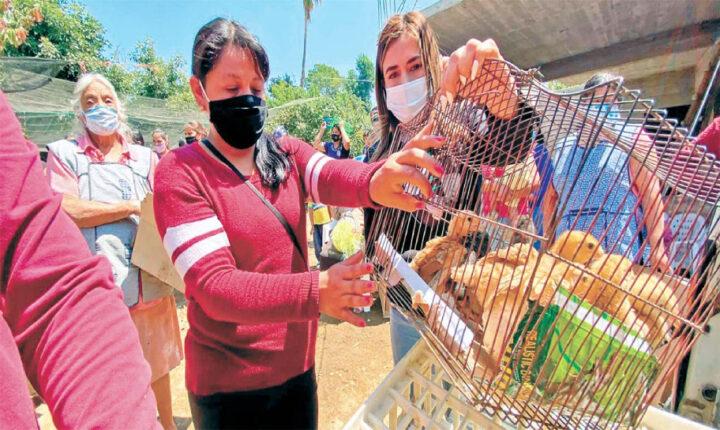 Dan paquetes de pollos a familias en Tetela del Volcán