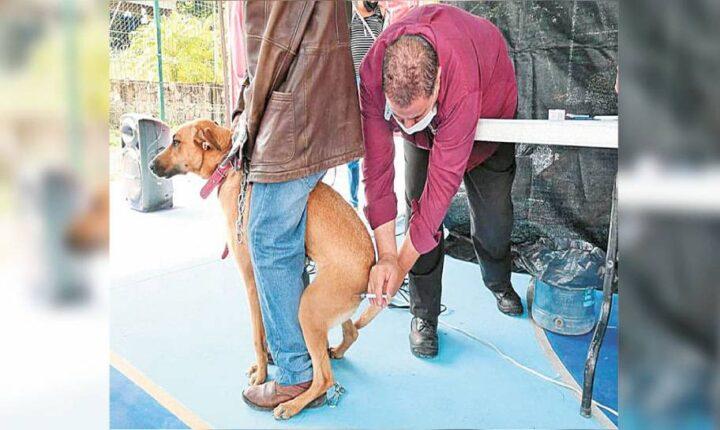 Organizan feria de la salud para mascotas en Cuautla