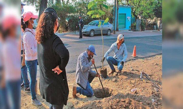 Siembran árboles en Zacualpan para revertir la sequía