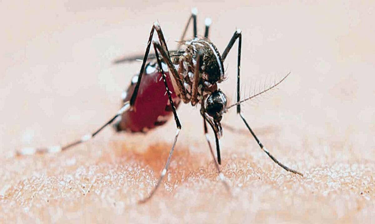 Al alza los casos de zika y de dengue en Morelos