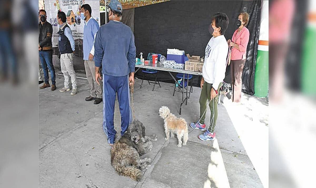 Anuncian Feria de la salud para mascotas en Cuautla