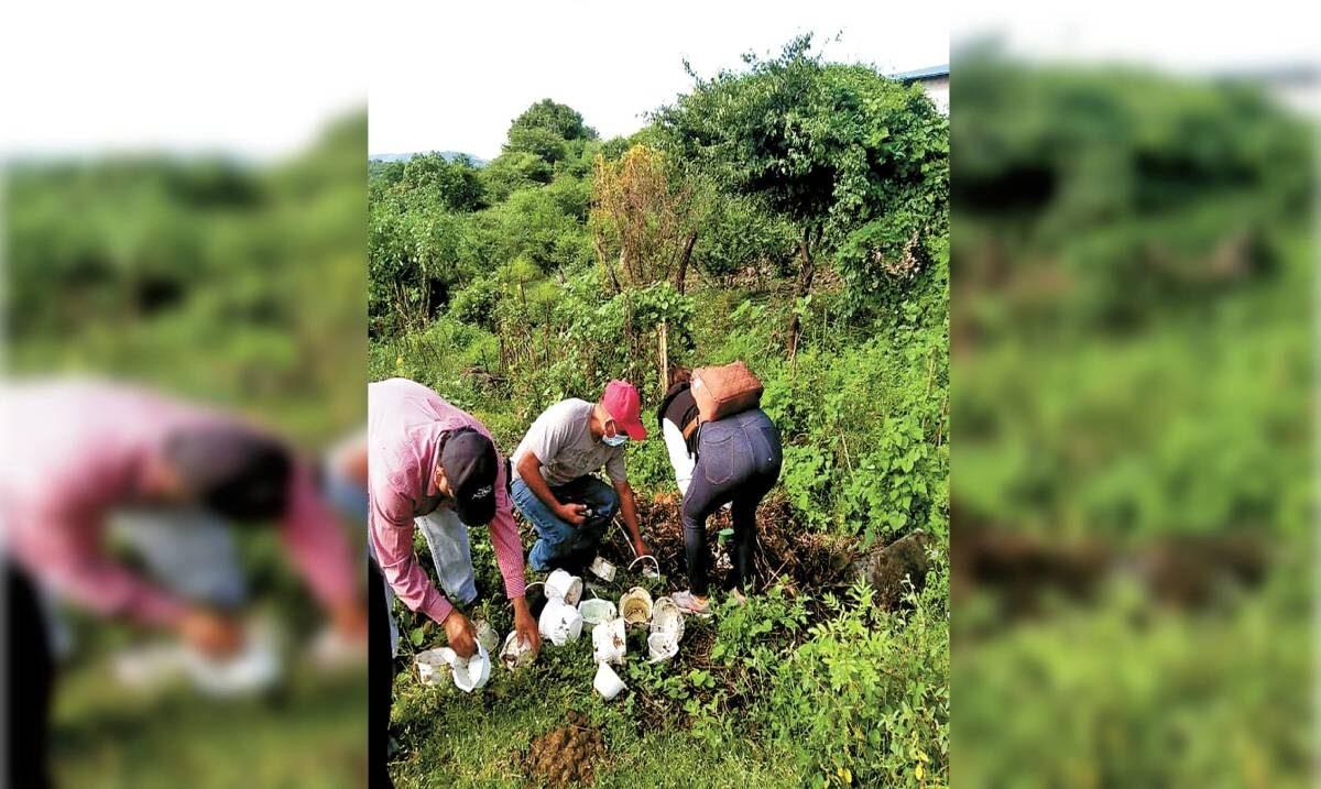 Ya suman 435 casos de dengue en Morelos